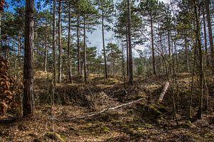 In het bos van a schotanus