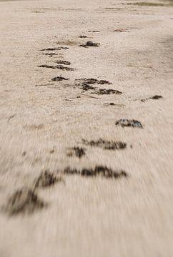 Strand von Marlies Laenen