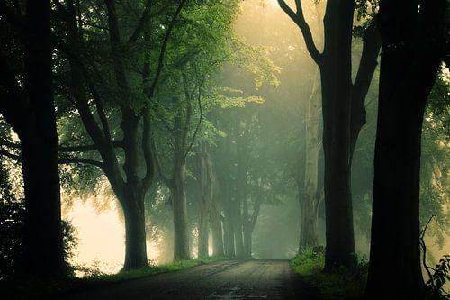 Misty Days van Martin Podt