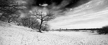 Loonse und Drunense Dünen von Thomas van der Willik