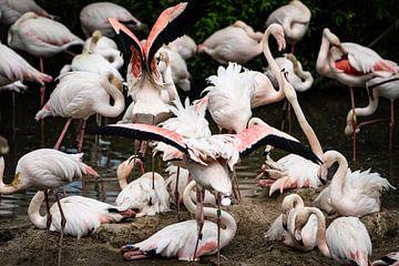 Flamingo Chaos van gwen van Mossevelde