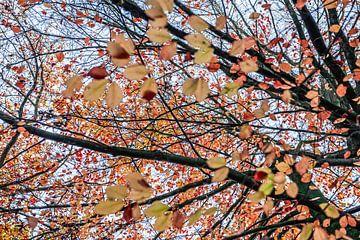 Kleuren van de natuur von Ratna Bosch