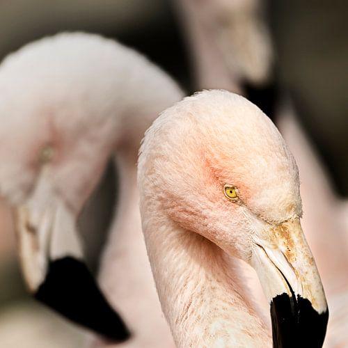 oogcontact met de roze flamingo