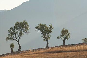 Trosje bomen bij Gubbio, le Marche. von Rens Kromhout