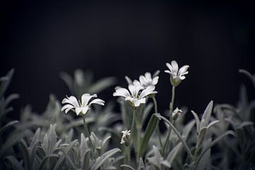 Garten von Melanie Niessink