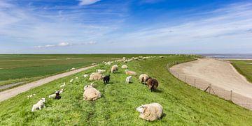 Schafe auf einem Deich am Wattenmeer von Marc Venema