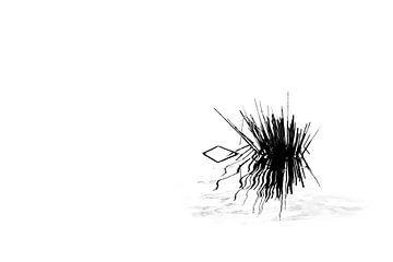 Binsen im Biesbosch in Schwarz-Weiß von Irene Damminga