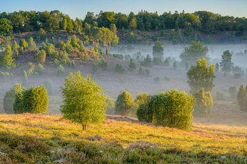 Morgens im Totengrund in der Lüneburger Heide von Michael Valjak