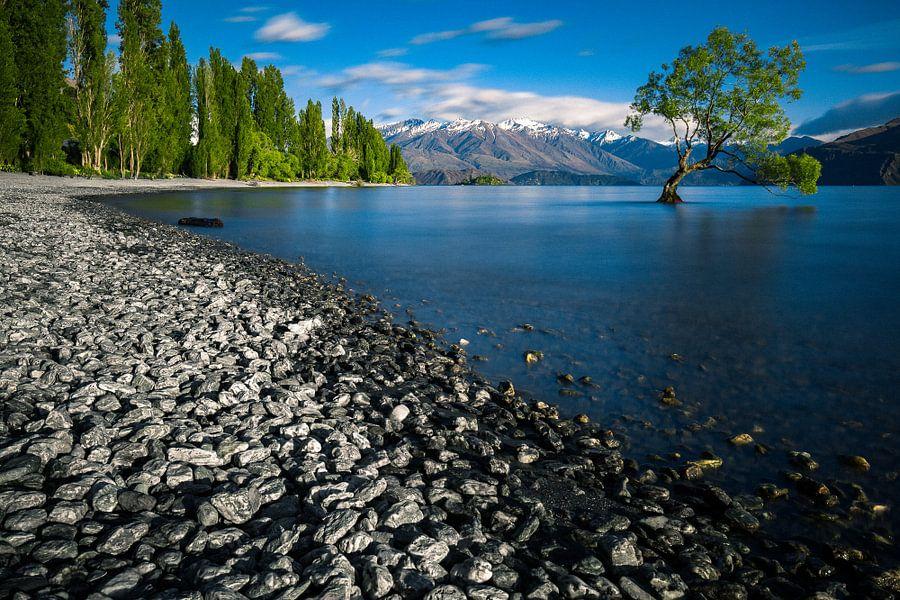 De eenzame boom van Wanaka - Wanakameer, Nieuw-Zeeland van Martijn Smeets