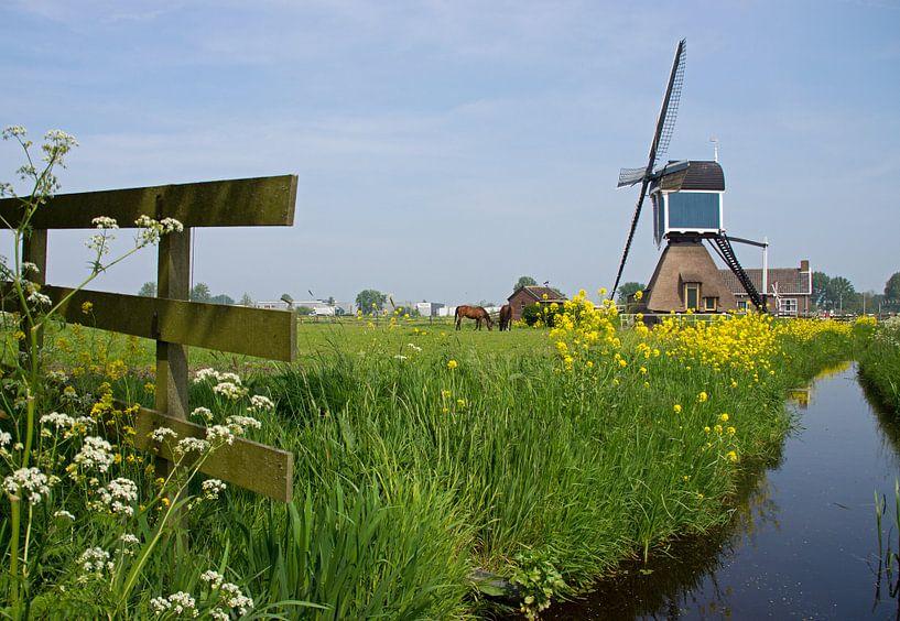 Zoeterwoude Rijndijk Molen van Miranda Bos