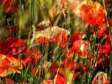 Mohn beim Sonnenbaden im Wind von Anita Snik-Broeken