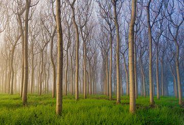 Morgen des Waldes, Andy Chan von 1x