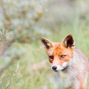 Foxy Foxtrot van