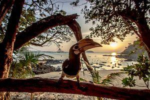 Hornbill watching the Sunset