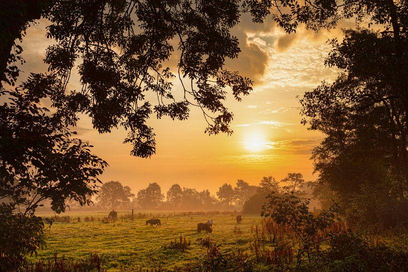 Pony's in het licht van de zonsopkomst met mist van R Smallenbroek