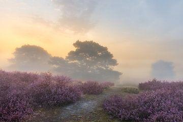 Magischer und geheimnisvoller Sonnenaufgang auf der Brunssummerheide von John van de Gazelle