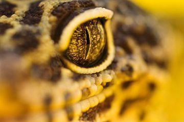 LP 70482670 Volwassen luipaard gekko, close up van BeeldigBeeld Food & Lifestyle