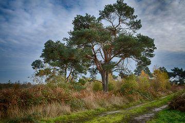 Baum in der Großen Schale (Limburg) von FotoGraaG Hanneke