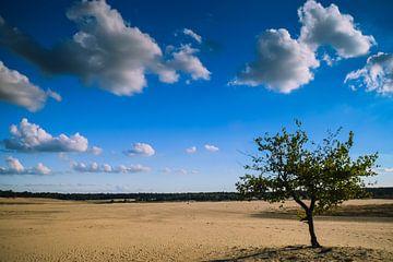 Loonse en drunense duinen van Miranda Rijnen Fotografie