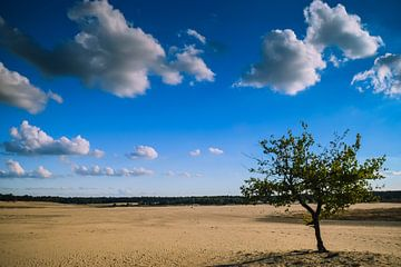 Loonse en drunense duinen van Miranda Rijnen
