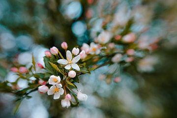 Pleasing Blossems van Hiske Boon