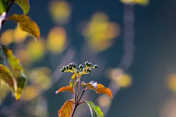 Macro shot van de prachtige natuur in de Scheveningse Bosjes van Scarlett van Kakerken