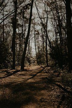 Bomen met schaduw en licht van Sanne van Pinxten