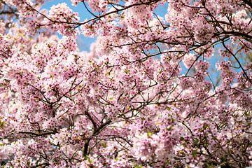 Blüte Baum von Sharona de Wolf