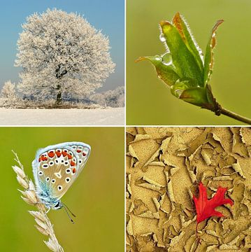 Seasons... van Caroline Lichthart