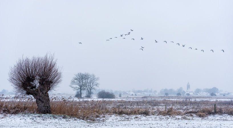 Zalk in de winter van Erik Veldkamp