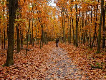Der einsame Radfahrer im Herbst von Moniek van Rijbroek