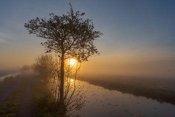Baumsilhouette im Nebel bei Sonnenaufgang von Beeldbank Alblasserwaard