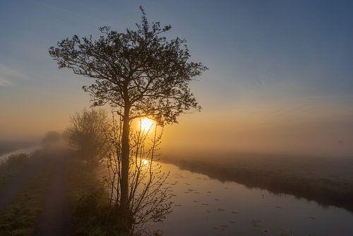 Silhouet van boom in mist bij zonsopkomst