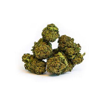 CBD Cannabis Onkruidmarijuana Bloesem van de Wiet van de Cannabis van het CBD van Felix Brönnimann