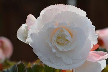 Prachtige bloem van Marchetti Fotografie