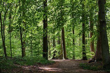 Schatten im Wald von Ina Muntinga