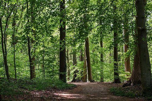 Schaduwen in het bos