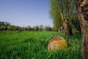 Badkuip in een veld in de lente van Mickéle Godderis