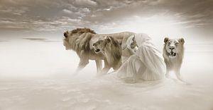 Löwengruppe mit Frauen in der Wüste von Ramon Enzo Wink