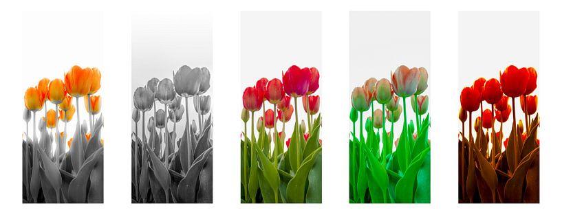 5 Shades of Tulips van Alex Hiemstra