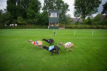 Windhund-Rennen von Gerrit de Heus