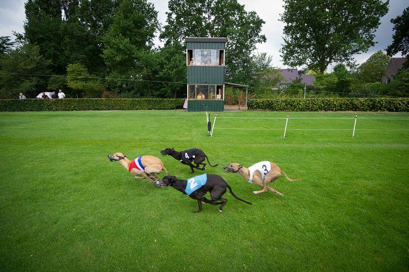 Windhondenrennen van Gerrit de Heus
