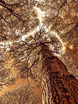 hoge bomen von harry de jong