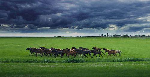 Riders in the storm - Zeedijk richting Marken
