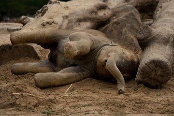 Jonge olifant van Renate Peppenster