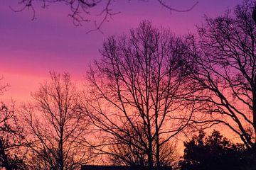 Roodpaarse lucht achter de bomen van Audrey Nijhof