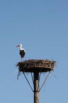 Ooievaar op nest van Elise Favié