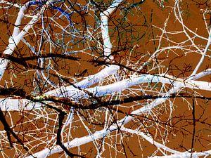 Verhaallijnen van een boom 1