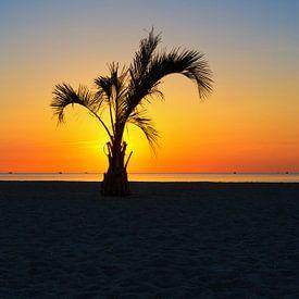 Eine Palme im Sonnenunteregang von Frank Herrmann