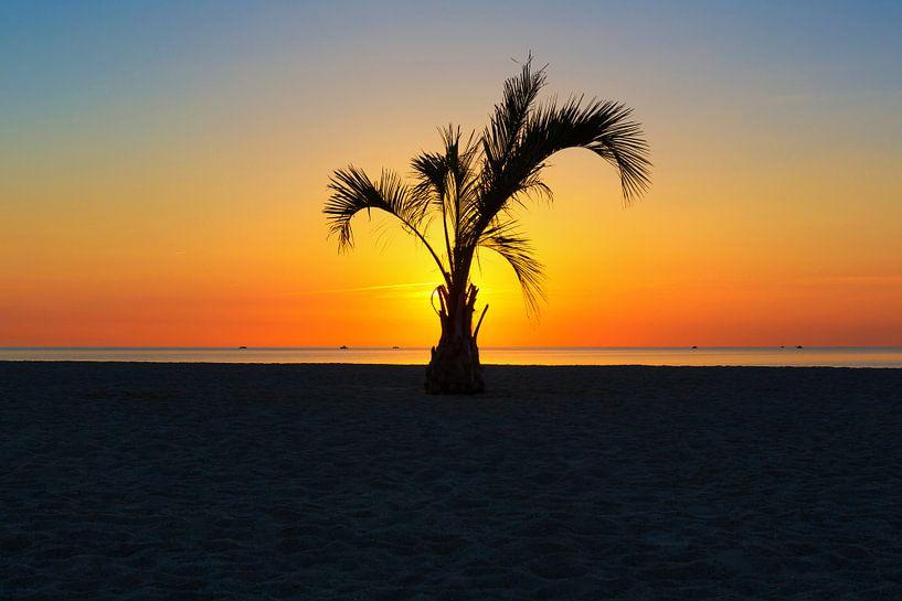 Un palmier au coucher du soleil sur Frank Herrmann